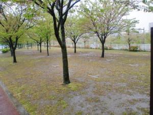 千本桜公園Cサイト